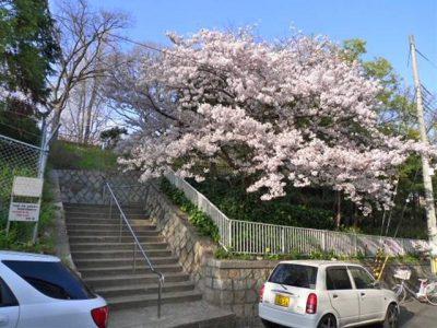 シリウスの道に出てくる宰相山公園の階段
