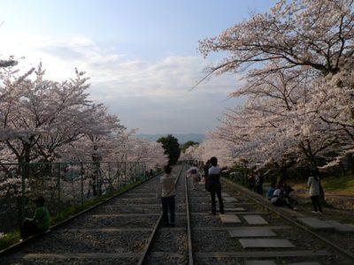 蹴上のインクラインの桜