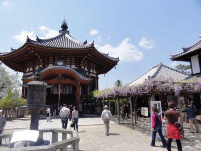 興福寺南円堂前の藤