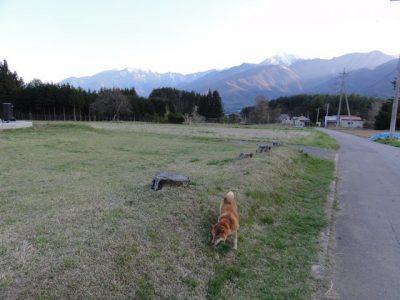 小淵沢で犬の散歩