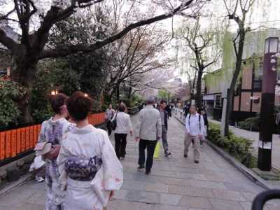 祇園の白川沿いの桜