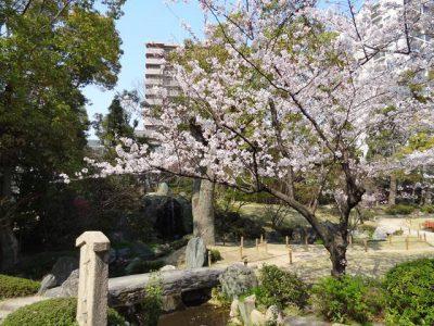 極楽浄土の庭