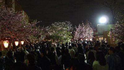 造幣局 桜の通り抜け 2016