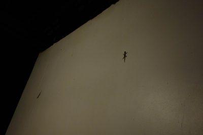 外側の壁に張り付くヤモリ
